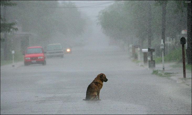 Sad_rain_dog